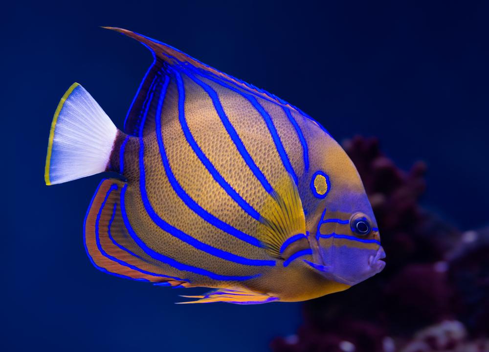 السمك في المنام للعزباء