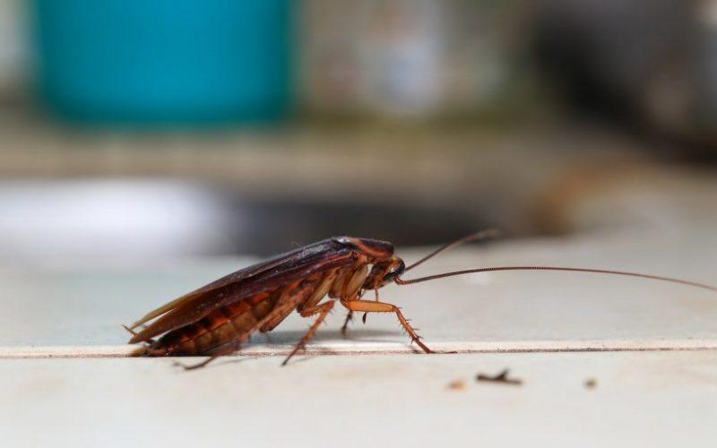 رؤية الصراصير في المنام فهد العصيمي