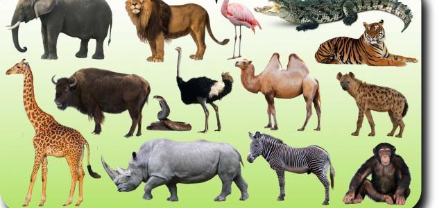 ما هي أكثر حيوانات تتغذى على النباتات وما هي أحجامها وأنواعها بالكامل